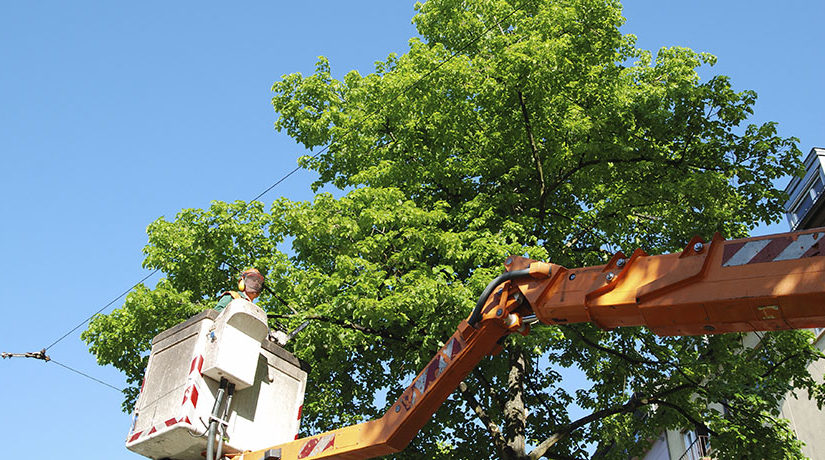 5 Tips To Consider When Looking For A Crane For Rent