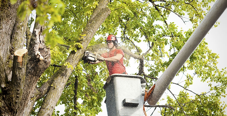 Tree Removal Services: Tips To Remember When Removing A Tree