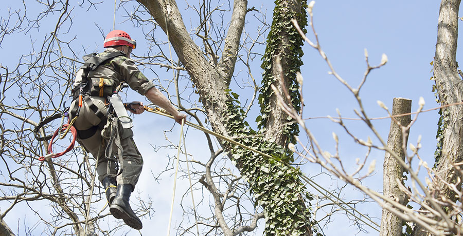 Tree Services – Tree Removal VS Tree Care